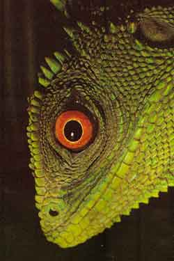 fauna ecuador: